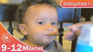 First Bites    Ages 9 to 12 Months   Parenting Tips by babystep.tv
