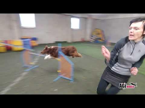 AGIrebels - Kuki - trénink agility - 2/2020