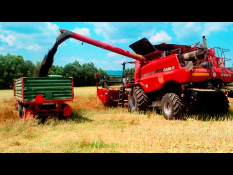 Case IH 5140 Axial-Flow Rapeseed Harvest 2015
