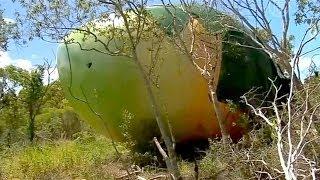Гигантское манго, украденное в Австралии, нашли (новости)(http://www.ntdtv.ru Гигантское манго, украденное в Австралии, нашли. В Австралии нашлась украденная скульптура гига..., 2014-02-26T07:53:44.000Z)