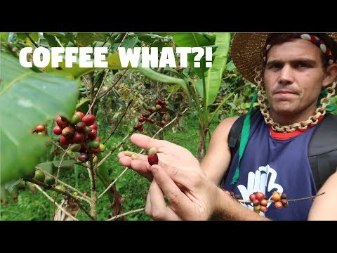 YOU CAN DO THIS WITH COFFEE?! (Filipino Farm Fun)