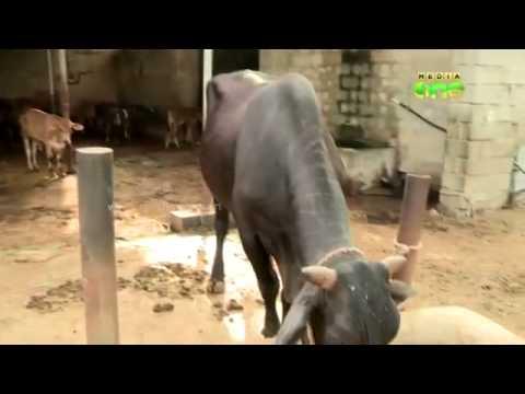 BEAUTIFUL ANIMALS & ORGANIC AGRICULTURE IN FUJAIRAH, UAE
