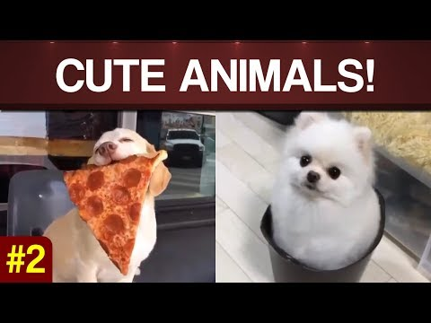 PETS & ANIMALS 🐶 Cute, Funny & Amazing Pets/Animals (Puppies, Kittens Compilation Video #1)