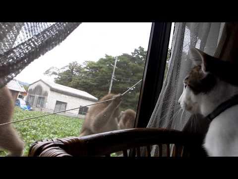 猫vs猿 パート2