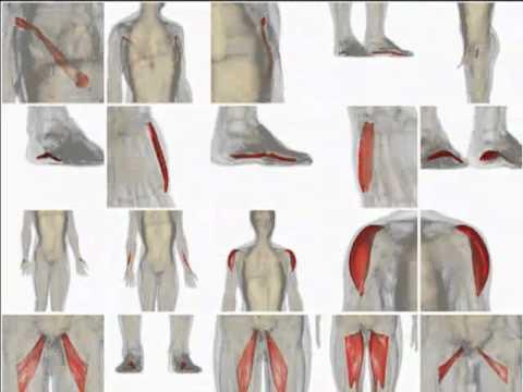 bodyparts3d anatomography