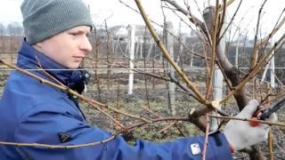 Обрезка персика. Чаша. ч. 1.  pruning peach(https://vk.com/samo_sad., 2016-02-14T06:06:24.000Z)