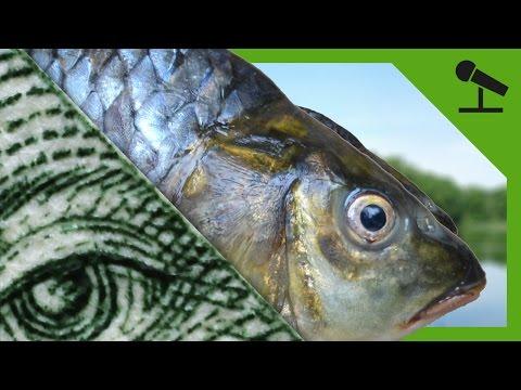Pravda o rybách: proč ji před námi vláda tají?