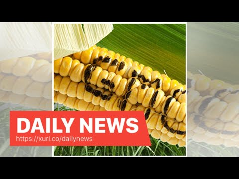 Daily News - Garlic growers in the United States love the Chinese trade war