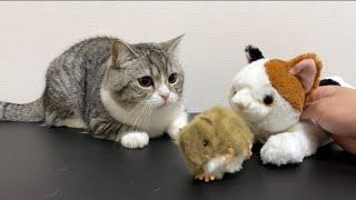猫に狩りのやり方をレクチャーしたら天才すぎてびっくりした件ww