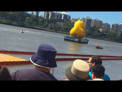 Australia's Biggest Duck Race