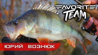 Вся рыба на одну приманку Ловля крупного окуня на озере поздней осенью Favorite Team