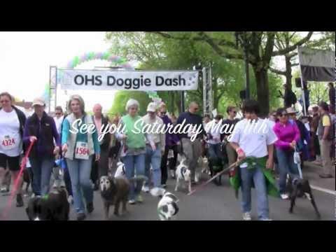 2013 Doggie Dash