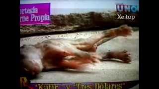 Perro macho pare 3 perritos en Guayaquil, En carne propia (Canal Uno-Ecuador)