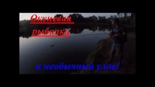 Окуневая рыбалка и необычный улов!