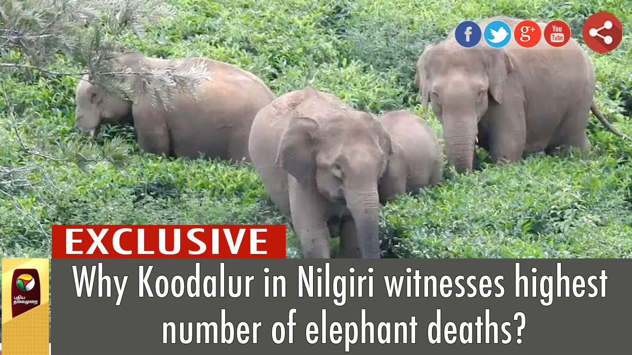 Why Koodalur in Nilgiri witnesses highest number of elephant deaths?