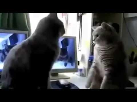 Zwei Katzen Singen Backe Backe Kuchen Kinderlied Deutscher Youtube