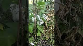 Кот ест сухие листья