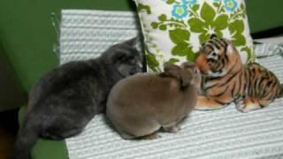 後ろからトラに襲われたウサギが反撃。