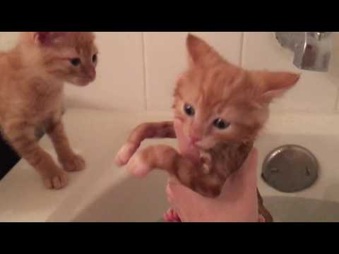 Foster Kitten Falls in the Bathtub with Me in it!