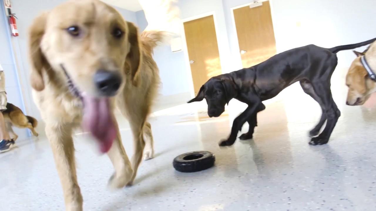 Good Dog Day Care