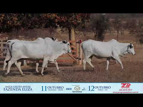 LOTE 188