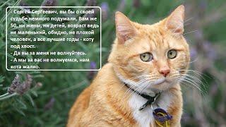 Анекдоты про котов/ ч. 1/Коты, кошки, котята / Домашние питомцы /Котэ Саратовский /Юмор