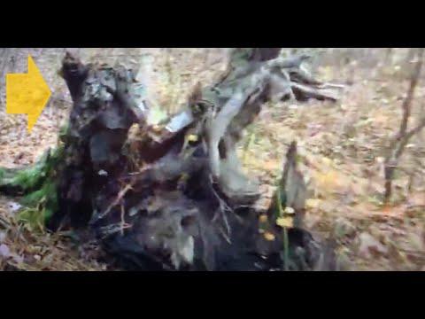 Sasquatch Side Road Extra / Tree Base Cloaking / NJ / 11.1.19 (solo)