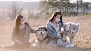 Dogs - Cute and   Funny Dog   Videos   Dogs Funny video Beautiful Dogs  