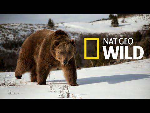 Nat Geo Wild: Дикая природа России Wildlife in Russia   National Geographic 4K Ultra HD - Видео онлайн