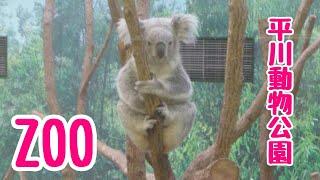 平川動物公園♪ シークレットプレゼン企画終了♪ お楽しみに♪ ☆5人で初ク...