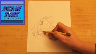 How to Draw a Cardinal