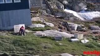 Grönland Gezi Notları Husky Kopeklerinin  Beslenme Saati