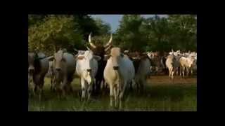 أول أغنية فلاتية سودانيةعلى-1st Sudanese Fulani Song on-youtube
