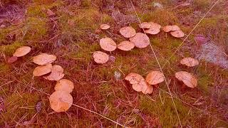 Фильм грибы убийцы
