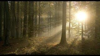 Richard Clayderman - Promenade dans les bois - Piano Cover
