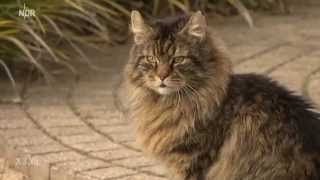 Realer Irrsinn: Illegale Bewohner in Burgwedel | extra 3 | NDR