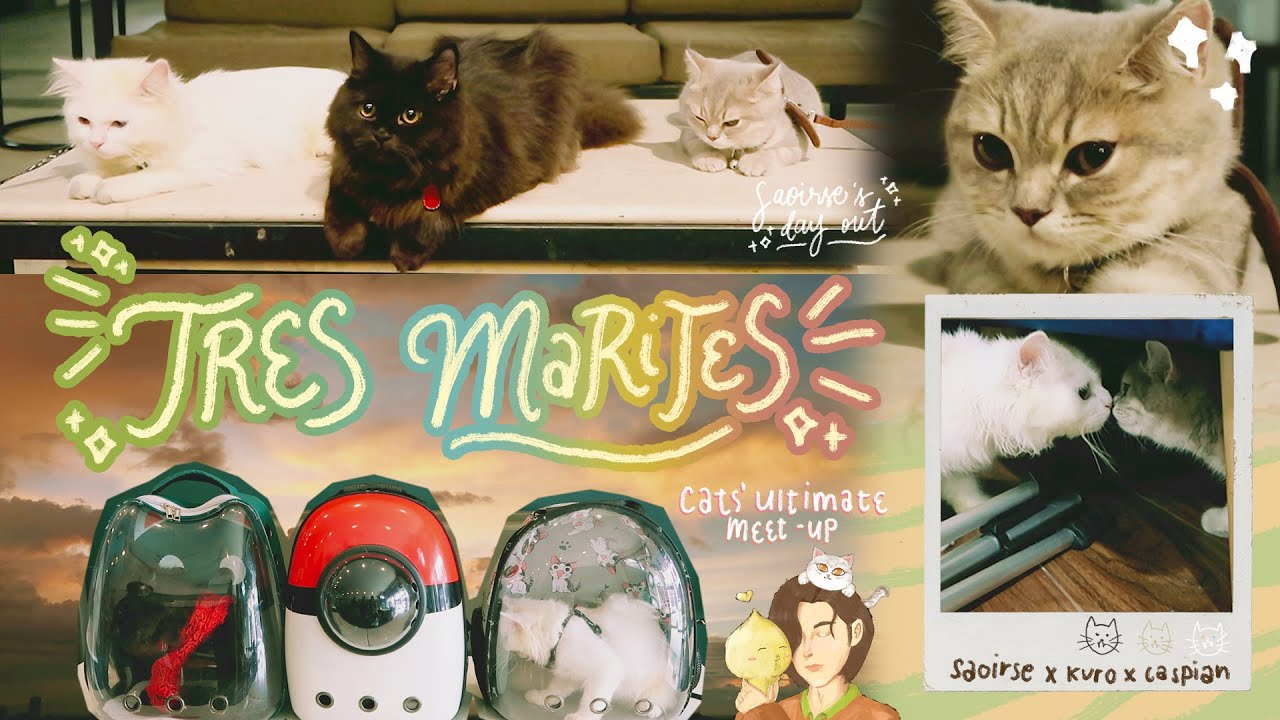 tres marites | saoirse's day out & cats' bonding uwu