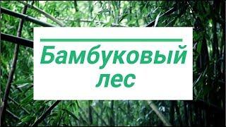 Бамбуковый лес. Экосистема