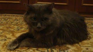Умер старый кот, 18 лет.