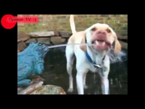 видеоприколы с домашними животными