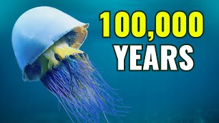 10 OLDEST Living Creatures On Earth!