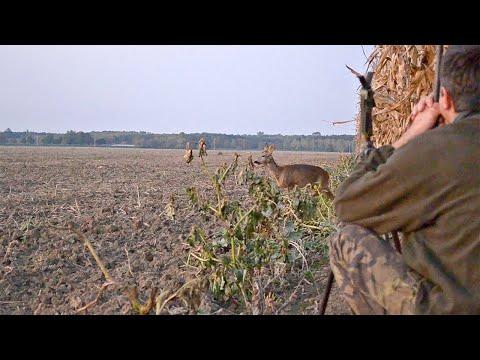 Охота на аномальную косулю в Чехии.
