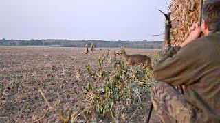 Охота на аномальную косулю 2020 в Чехии