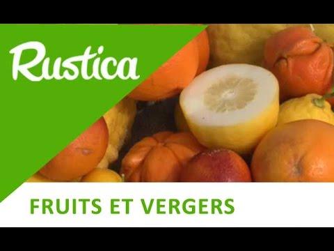 Découvrir le conservatoire des agrumes en Corse