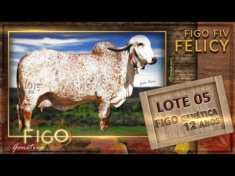 LOTE 05 - FIGO FIV FELICY - HCFG 1015