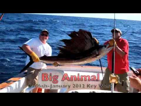 Fishing key west with cowboy charters key west sailfish for Key west shore fishing