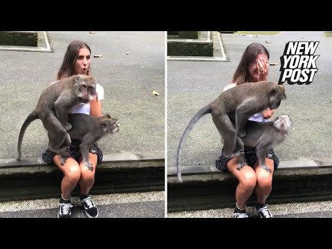 Fast Freddie - Monkeys start mating on an unsuspecting woman's lap