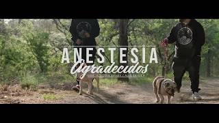 ANESTESIA - AGRADECIDOS YouTube Videos
