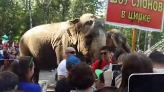 шоу индийских слонов челябинск