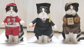 Real CatWalk. Episode 3 of 5